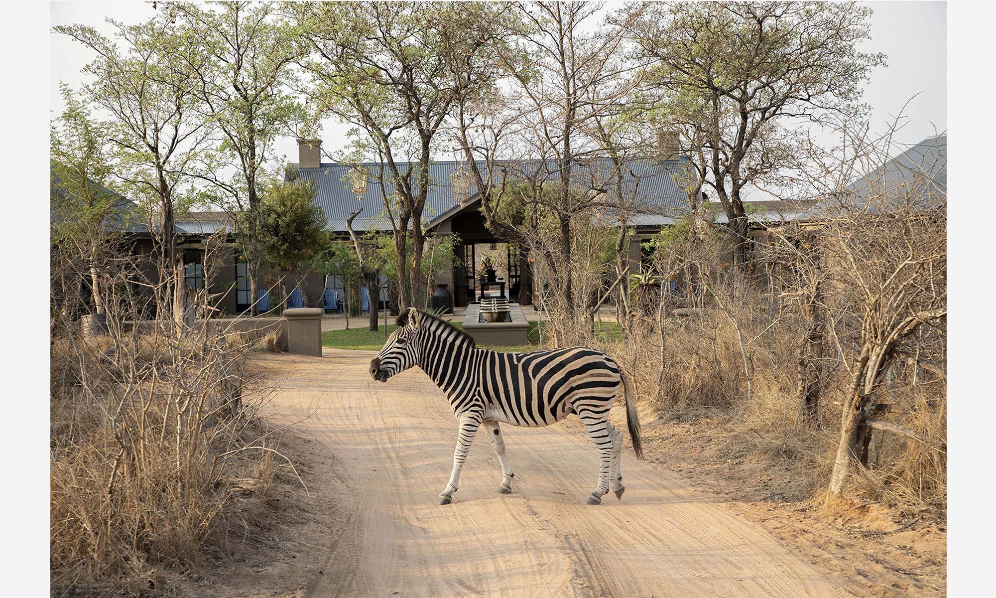 Guido Taroni - books: Safari Style